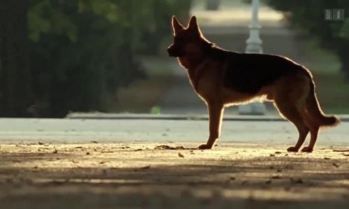 """Trích """"Rex - chú chó thám tử"""""""