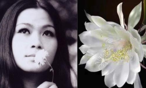"""Khánh Ly hát """"Quỳnh hương"""""""
