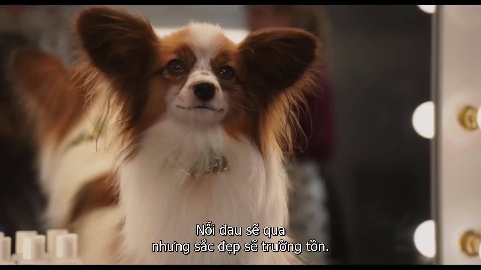 Trailer Show Dogs (Biệt đội cún cưng)