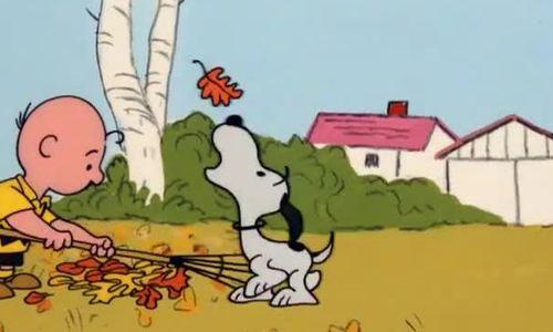 Phim It's The Great Pumpkin Charlie Brown (1966)