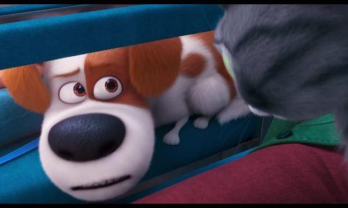 The Secret Life of Pets 2 kể về nỗi lòng thú cưng khi chủ có con