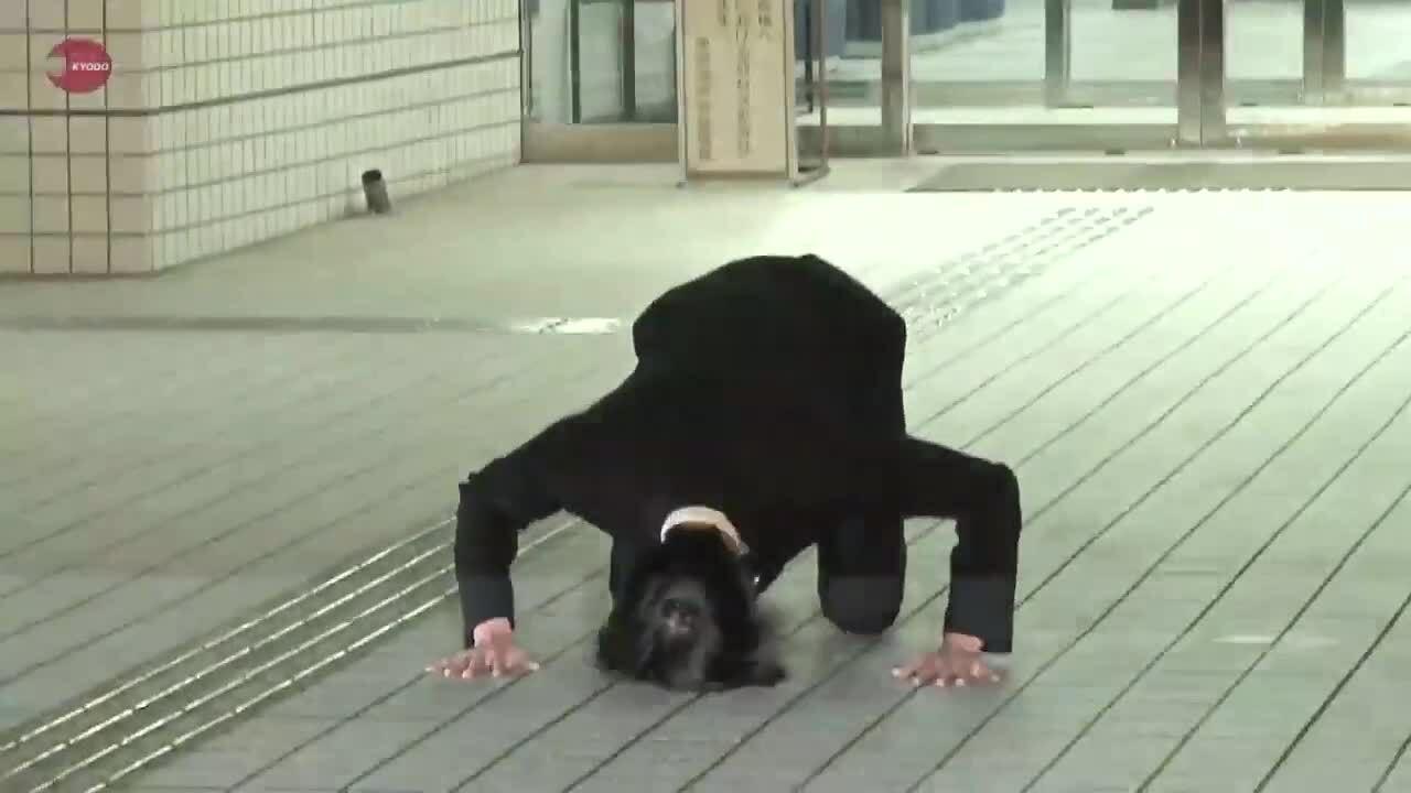 Taguchi Junnosuke xin lỗi