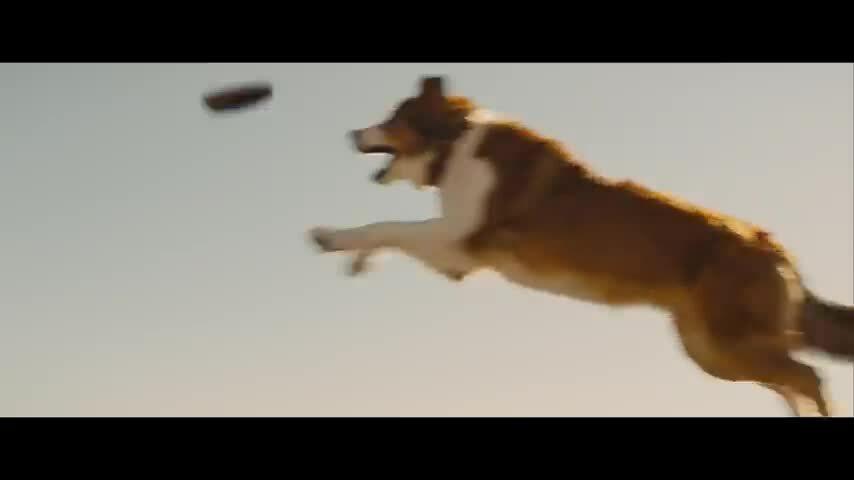 "Trailer phim ""A Dog's Journey"""