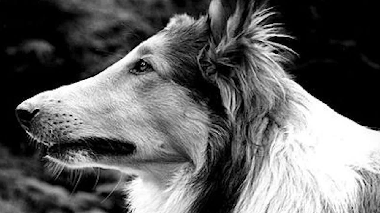 Những chú chó nổi tiếng trên phim (sửa)