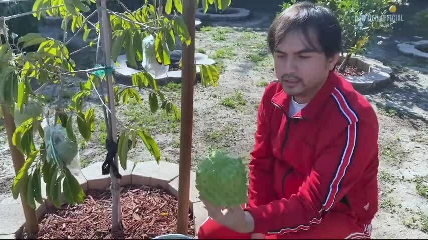 Vườn trái cây 740 m2 ở Mỹ của Đức Tiến