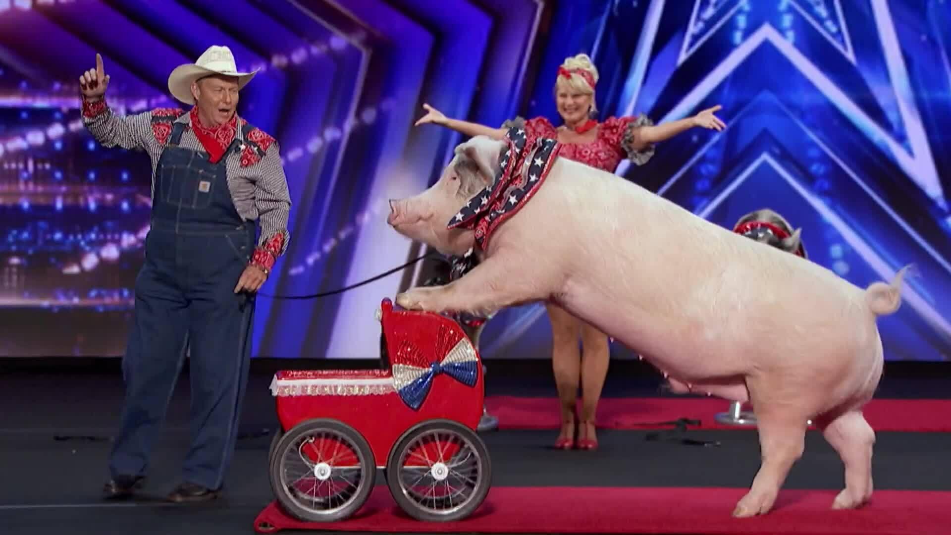 Xiếc lợn Pork Chop Revue America's Got Talent