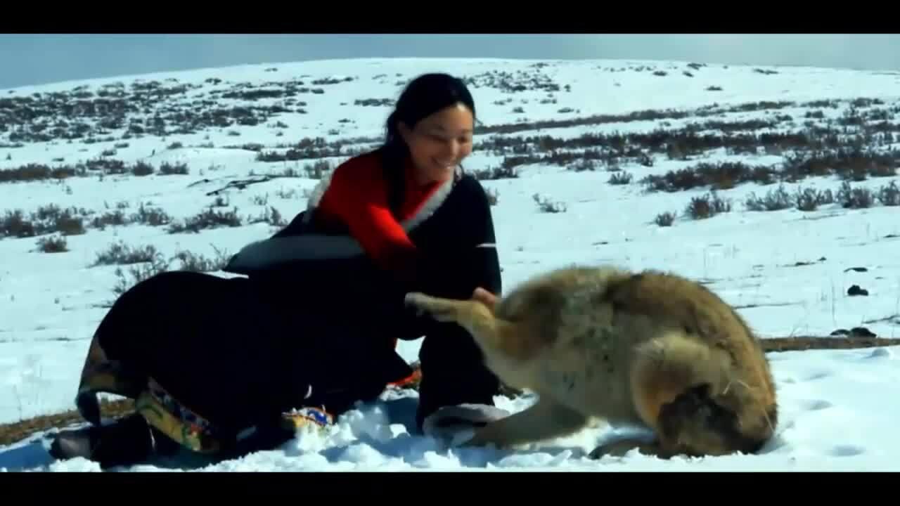 Nữ họa sĩ Trung Quốc kể chuyện thuần phục sói hoang