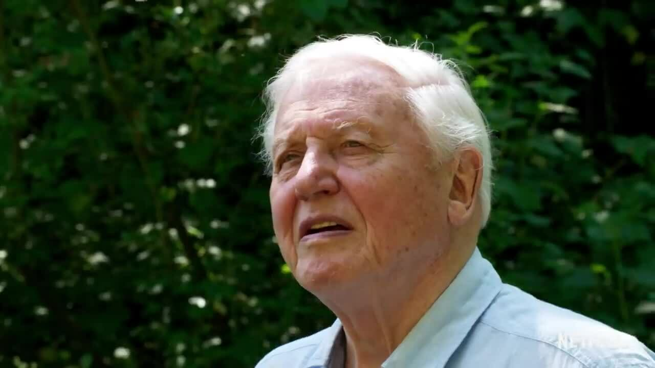 """David Attenborough: A Life On Our Planet"""""""