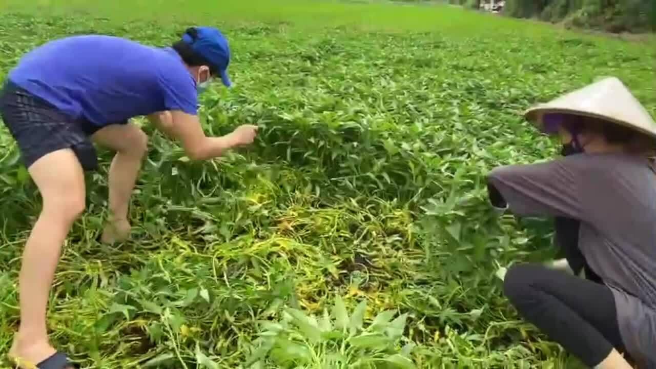 Sao Việt ngày đêm gom rau, củ giúp dân chống dịch