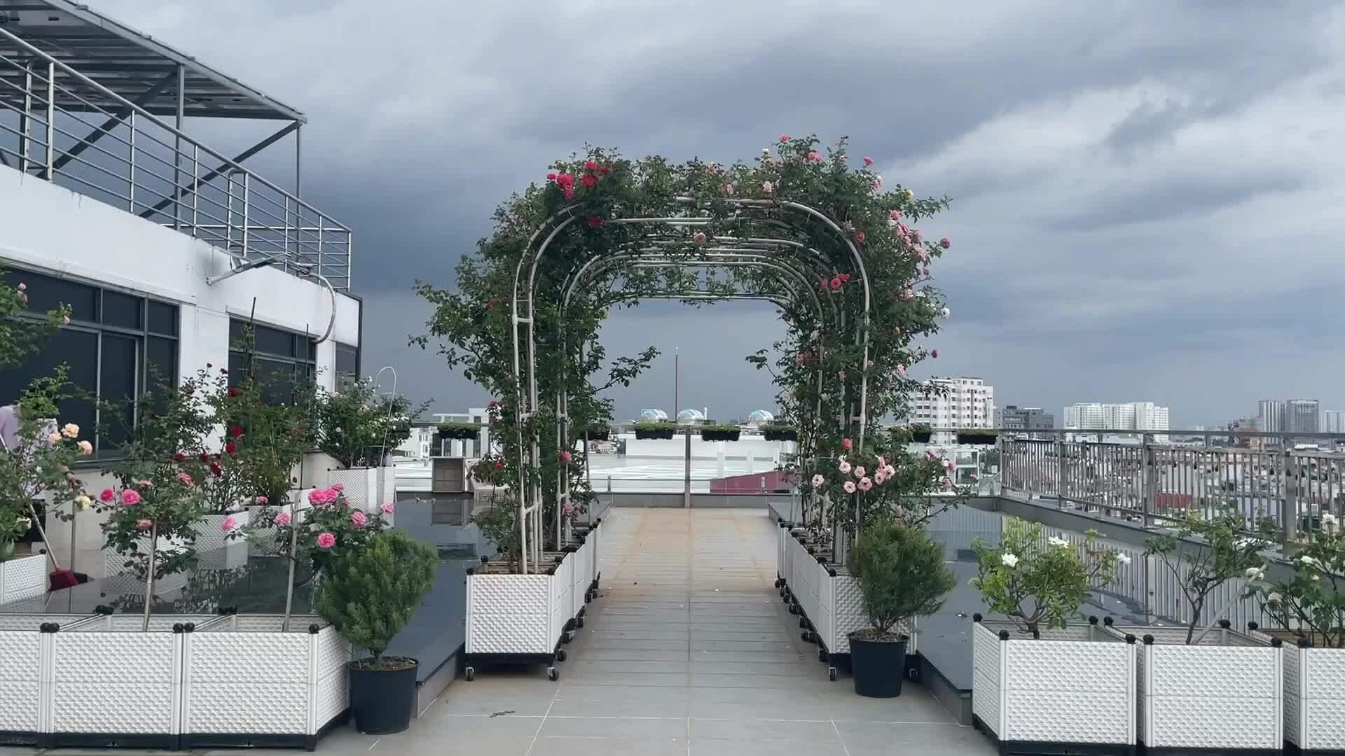 Vườn hồng nở rộ hoa của Phan Hiển, khánh Thi