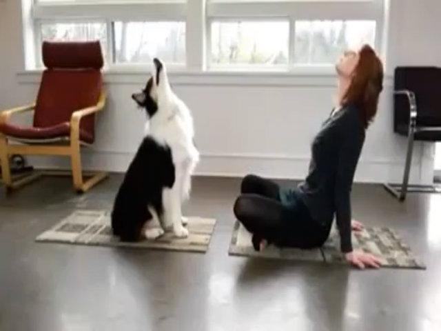 Chú chó tập Yoga 'siêu đỉnh'