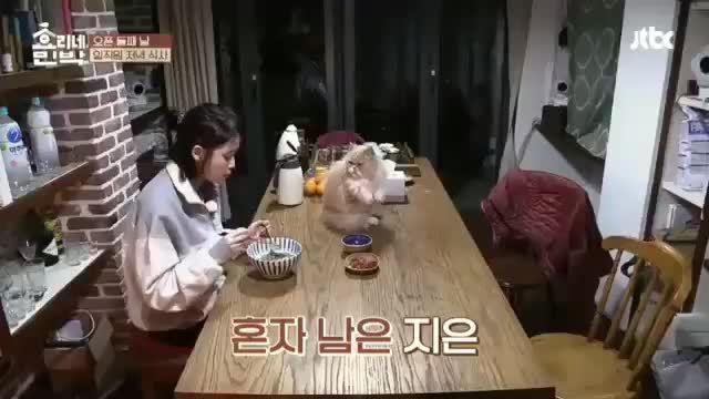 Mèo 'mặt khó ở' là nhân vật quyền lực tại ngôi nhà 'Hyori's Homestay'
