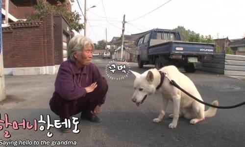 Phát cuồng với chú chó lễ phép nhất hệ mặt trời