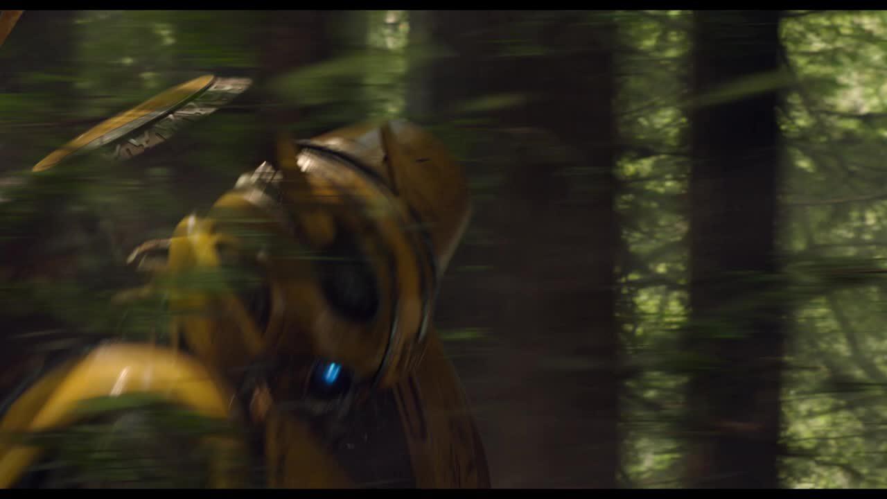 'Bumblebee' 1