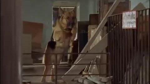 'Rex – chú chó thám tử'