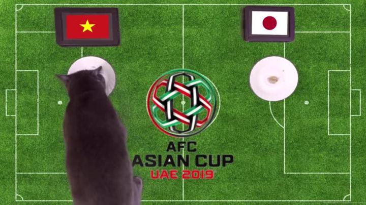 Mèo tiên tri nước Anh dự đoán Việt Nam thắng Nhật Bản