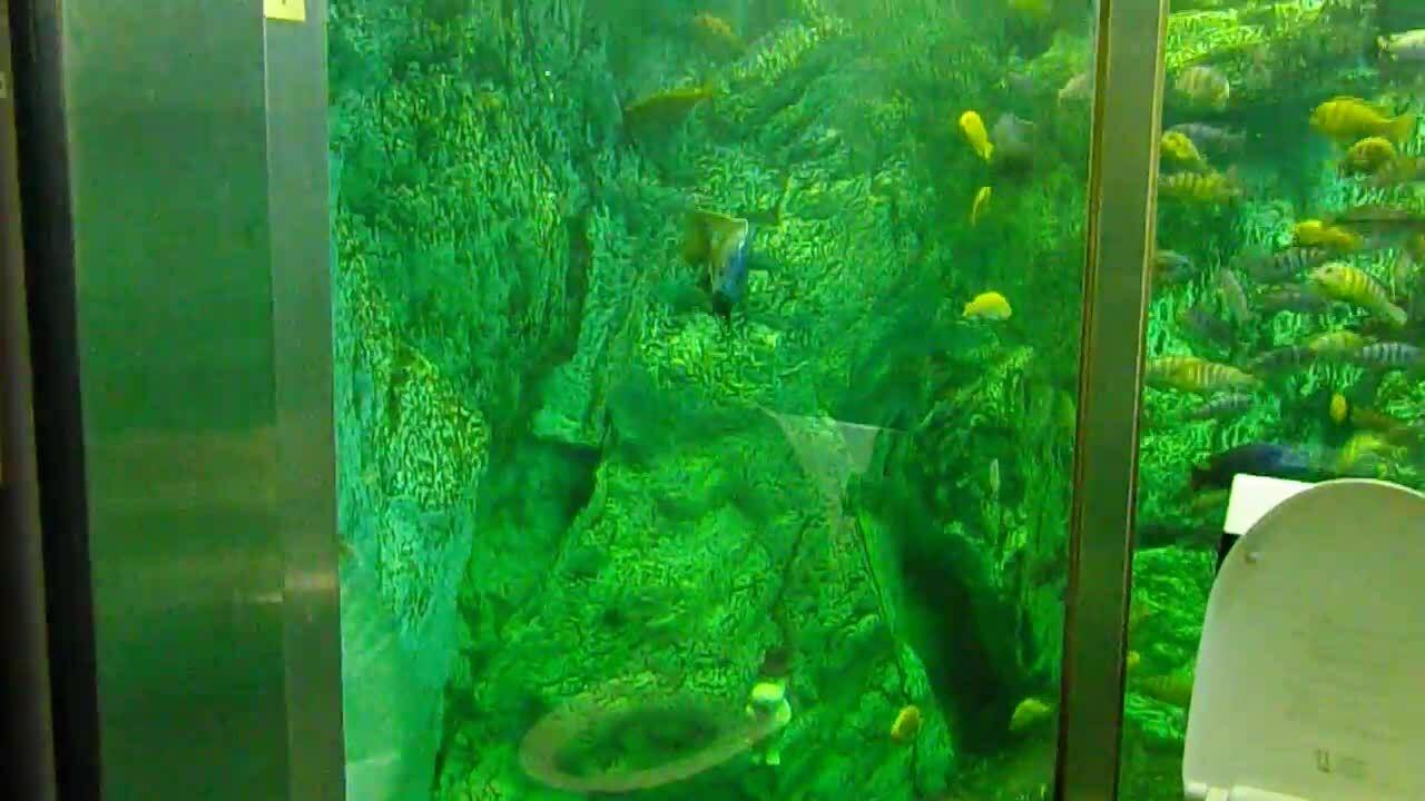 Nhà vệ sinh thủy cung cực độc tại quán cà phê Nhật Bản