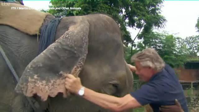 Nhà bảo vệ động vật gây phẫn nộ khi đạp vòi, túm tai voi