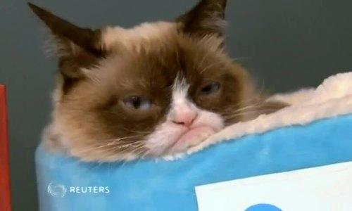 Mèo Grumpy với khuôn mặt 'dỗi hờn cả thế giới' qua đời