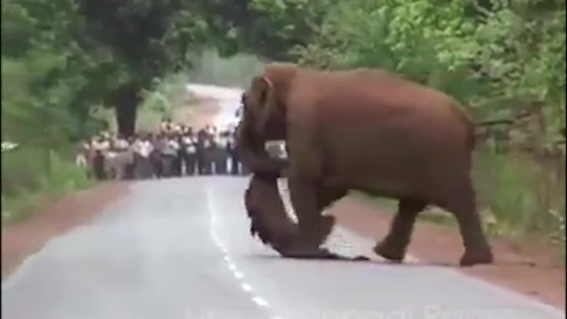 Thay video bài đàn voi đưa tang