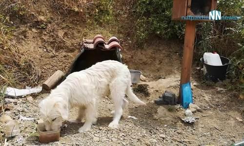 Chú chó 'Hachiko Hy Lạp' gây xúc động vì chờ đợi 18 tháng tại nơi chủ qua đời