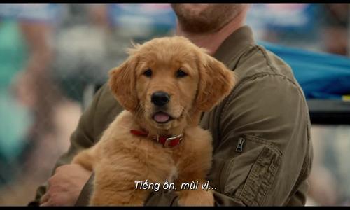 Cuộc đời phi thường của chú chó Enzo Trailer