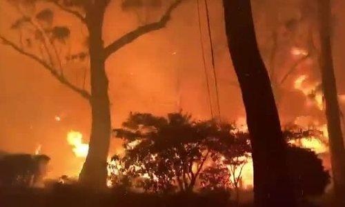 Video cháy rừng ở Australia