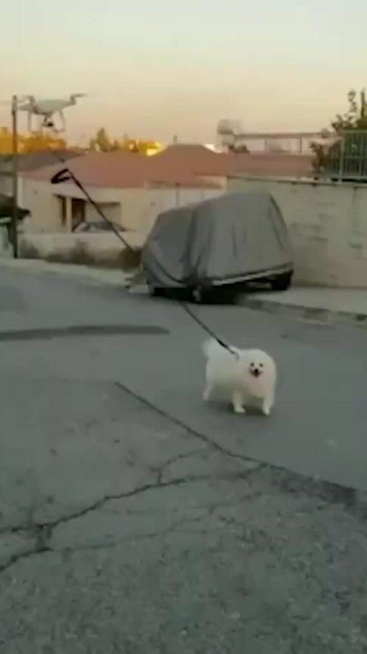 Dắt chó đi dạo bằng drone thời Covid-19
