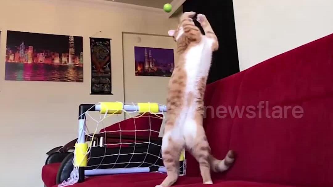 Những chú mèo bay người bắt bóng điêu luyện