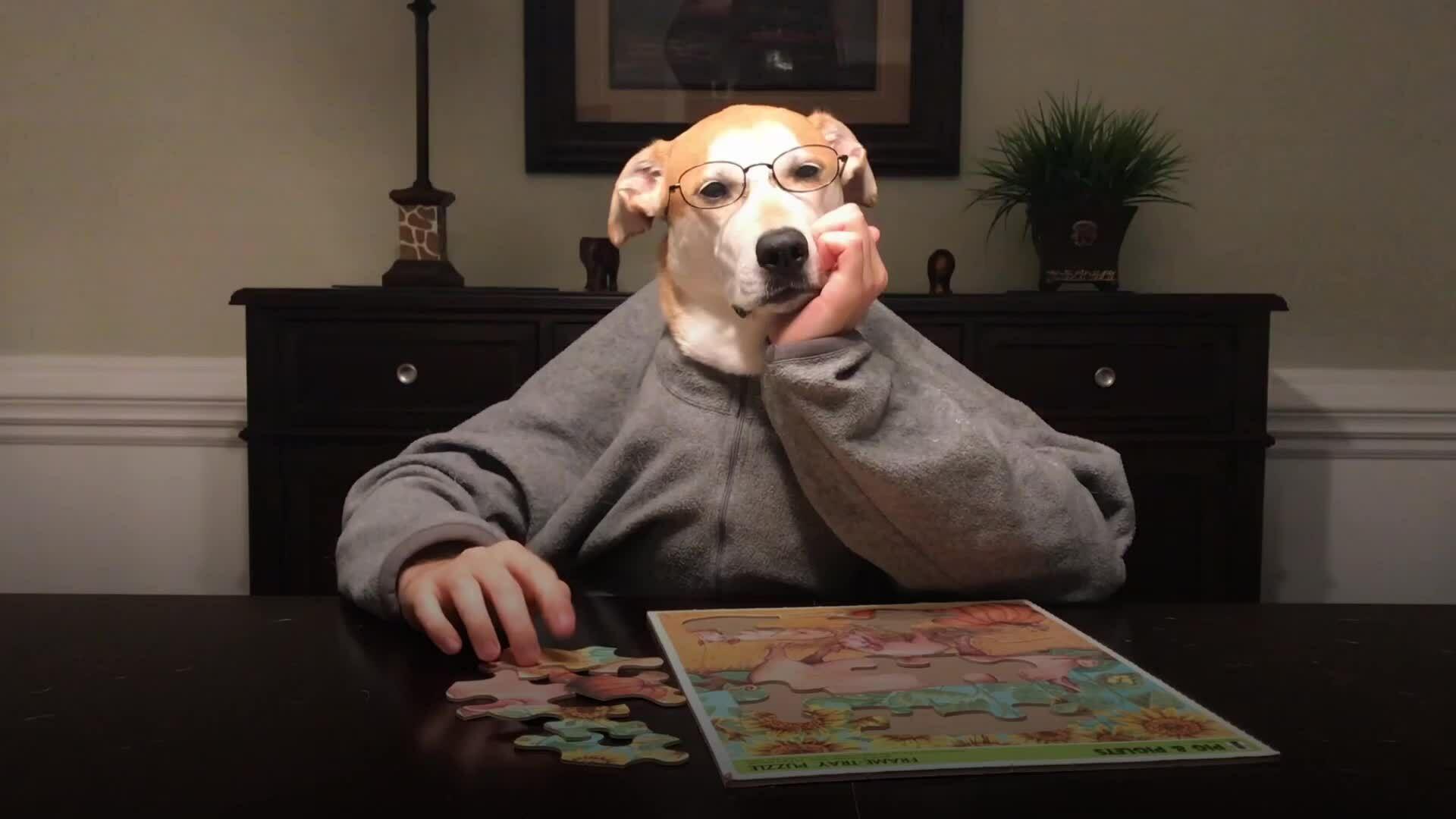 Chú chó 'tự tay' làm các công việc nhà