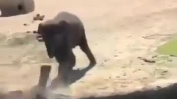 Voi đẩy bạn xuống nước