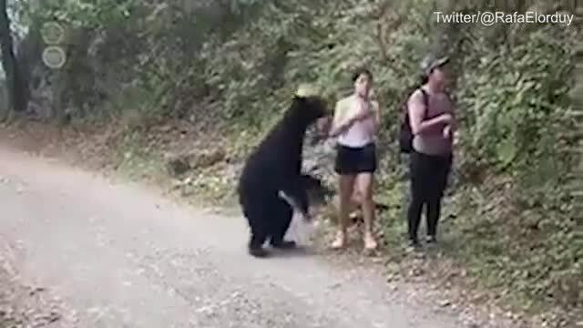 Thoát chết vì bình tĩnh selfie với gấu
