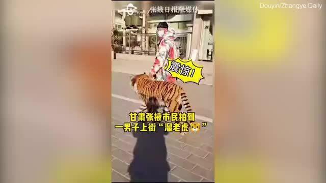 Góc 'hú hồn': Hổ đi dạo trên đường phố hóa ra là chó cưng được nhuộm màu