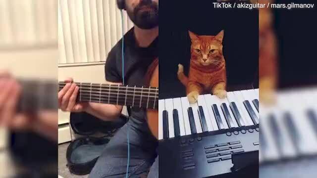 Mèo đệm piano cho chủ nghêu ngao hát
