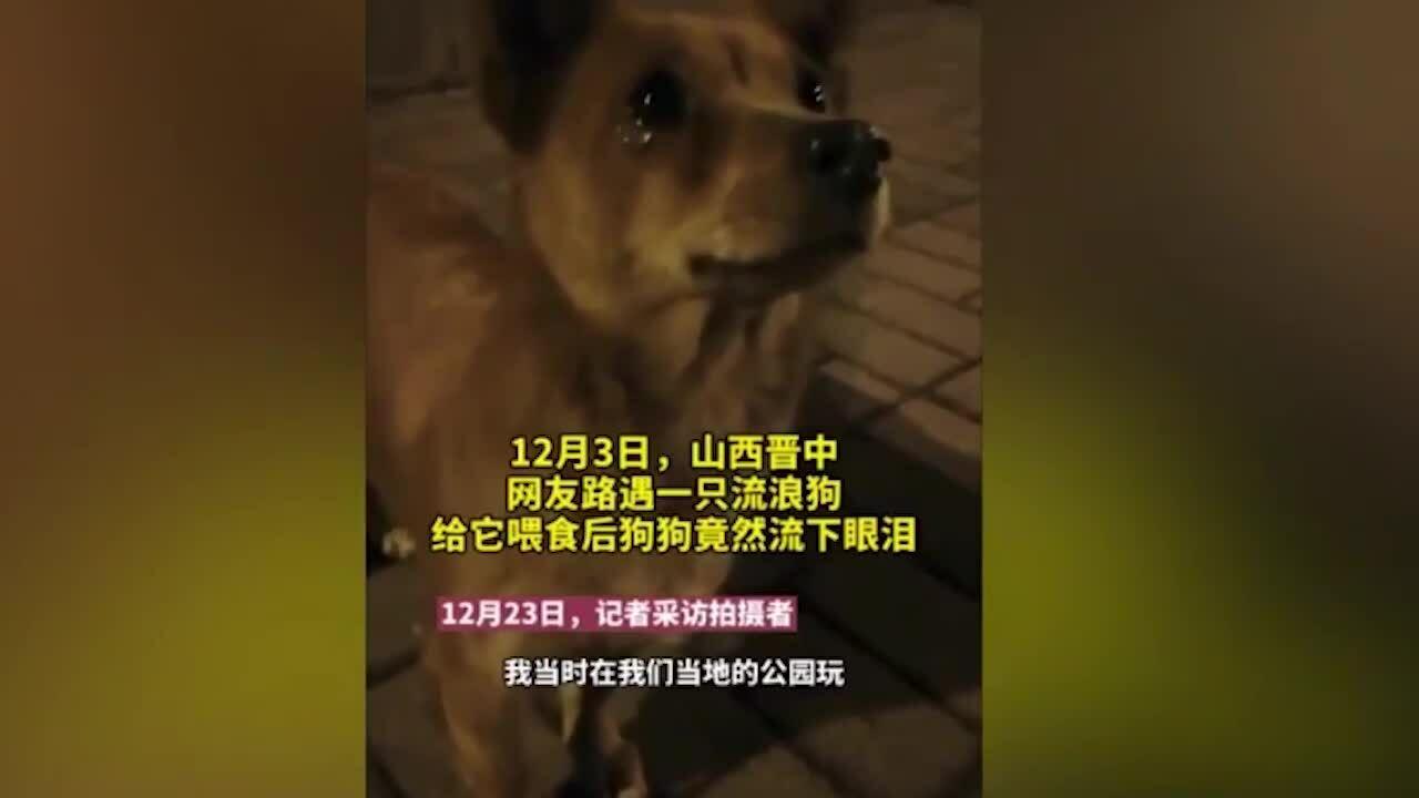 Chó hoang 'khóc' khi được người lạ cho đồ ăn