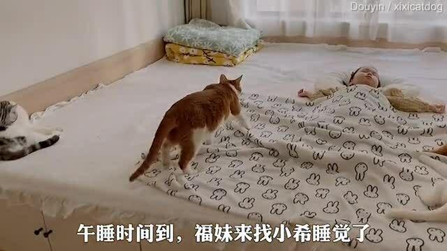 5 mèo cưng ngoan ngoãn bên cô chủ nhỏ ngủ say sưa hút view