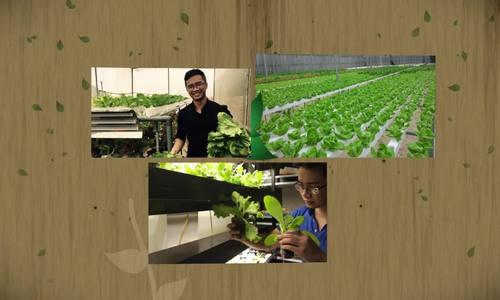 Tình yêu với nông nghiệp sạch của chàng kỹ sư công nghệ
