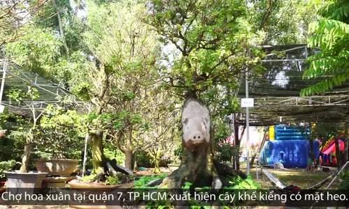 Cây khế mặt heo giá nửa tỷ đồng ở chợ hoa Sài Gòn