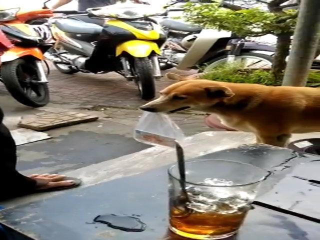 Chú chó theo chân chủ đi bán vé số ở Cà Mau