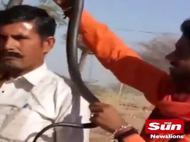 Mải chụp hình, người đàn ông Ấn Độ bị rắn hổ mang cắn chết
