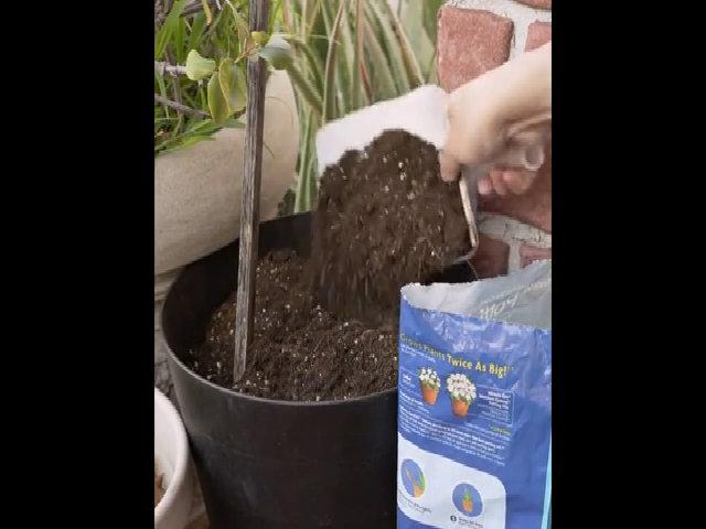 Biến tấu can nhựa thành dụng cụ làm vườn