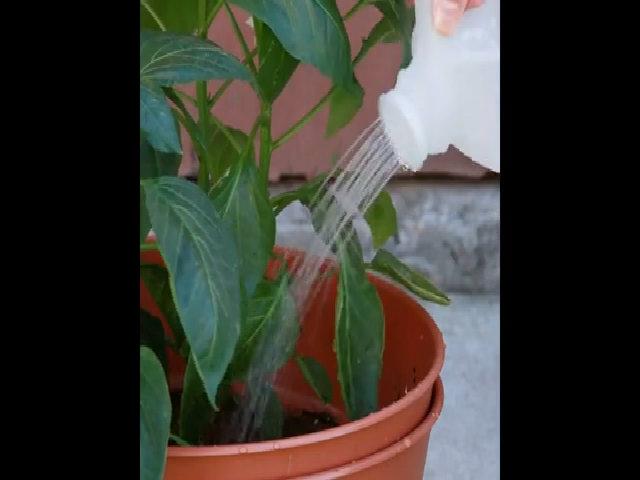 Làm bình tưới cây từ can nhựa