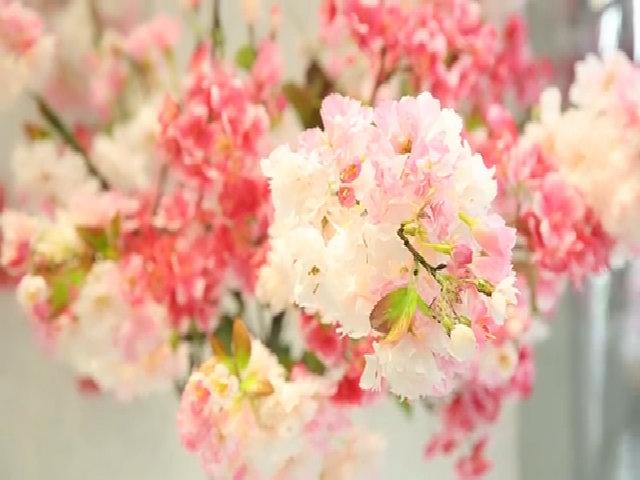 Những điều cần biết về mỹ phẩm Sakura