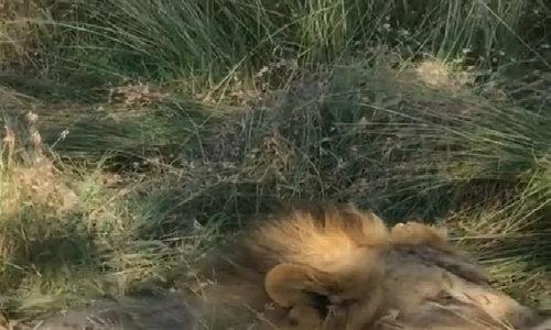 Becks xuýt xoa trước vẻ đẹp của đồng cỏ châu Phi