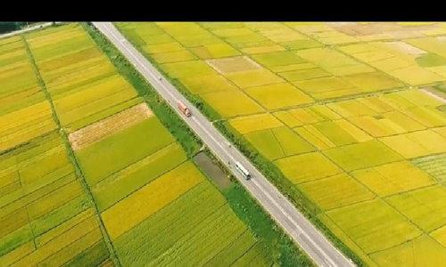 Ngỡ ngàng trước cảnh 'hoa vàng cỏ xanh' ở Thăng Bình, Quảng Nam