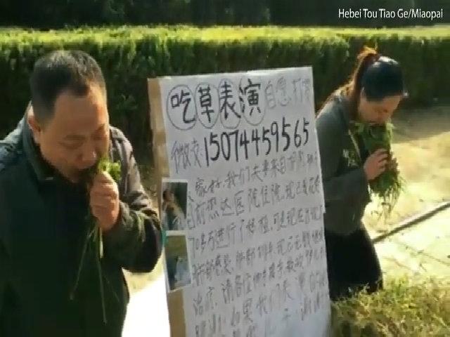 Cha mẹ ngồi ăn cỏ trên đường để gây quỹ chữa ung thư cho con trai