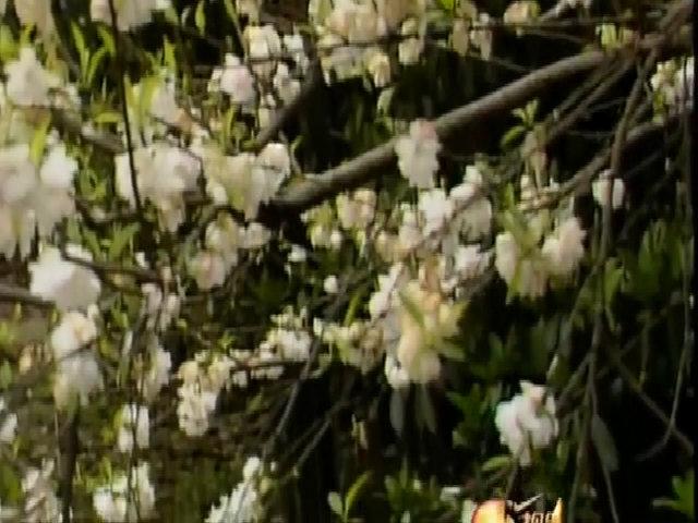 """Ca khúc nhạc phim """"Hồng Lâu Mộng"""" 1987"""