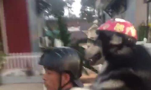 Chú chó ngồi sau xe máy như người gây sốt mạng xã hội
