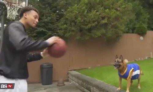 Chú chó phối hợp chuyền bóng để úp rổ ghi điểm