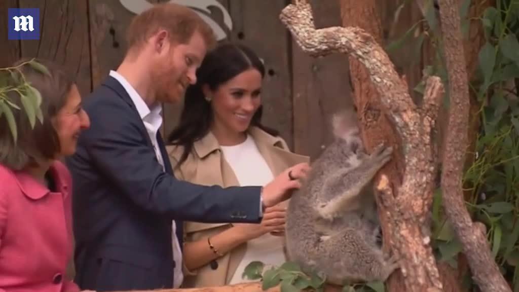 Meghan liên tục cười khúc khích khi đi thăm vườn thú với chồng